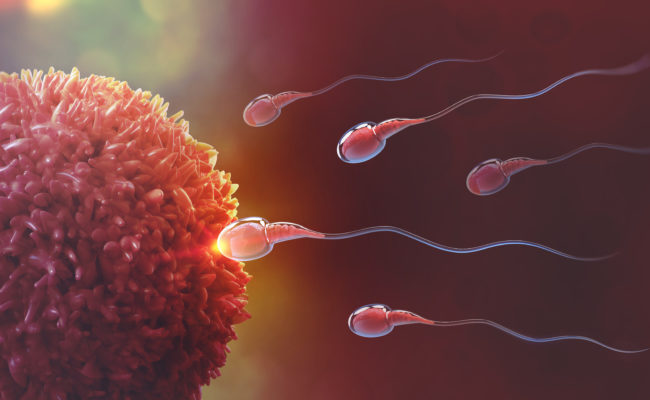 Sperm going to the egg